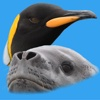 Antarctic Wildlife Guide