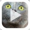 Slideshow Karaoke: Presentation Improv Game