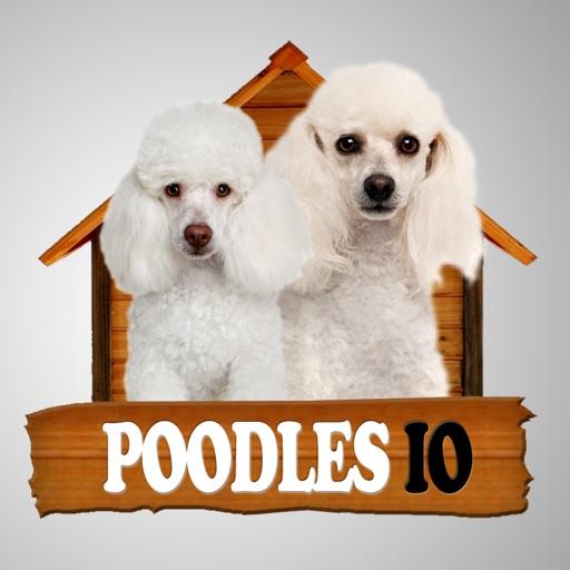 Poodles IO iOS App
