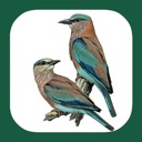 eGuide to the Handbook of Bird Identification for Europe and the ...
