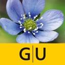 Blumen bestimmen – entdecken Sie, welche Pflanzen und Blüten Sie ...