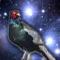 Raider Pheasant