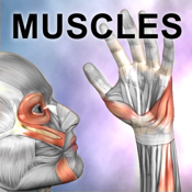 Learn Muscles : Anatomy Quiz & Reference icon