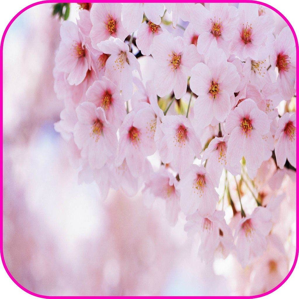 Spring Flowers Live Wallpaper Spring Flowers Frames Free Iphone