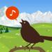 Cui-cui! Chants d'oiseaux d'Europe +