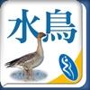 台灣水鳥圖鑑