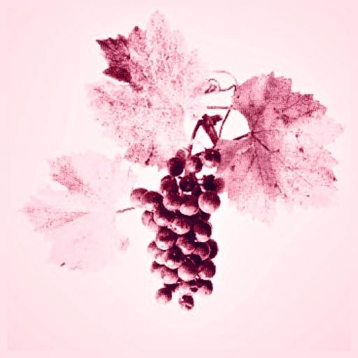 Atlas Vins
