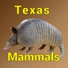 Texas Mammals - Guide to Common Species