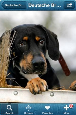 1,337 Dog Breeds,Veterinary screenshot 4