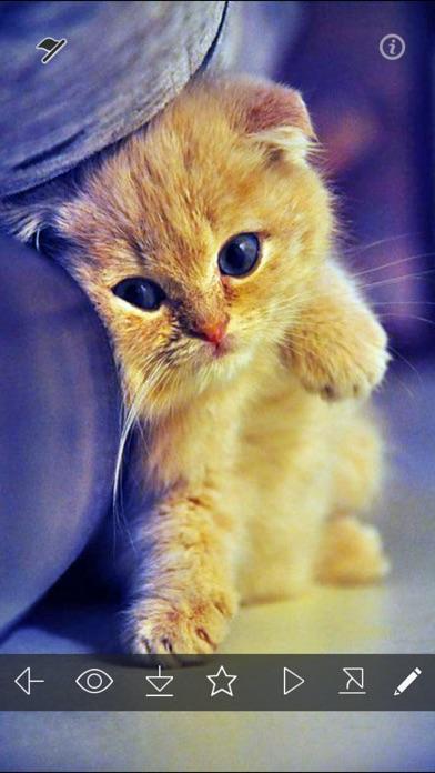 Cute kitty wallpapers hd cat kitten pictures app - Cute kitten wallpaper free download ...