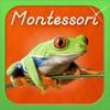 Animal Kingdom (Vertebrates) - Montessori Zoology