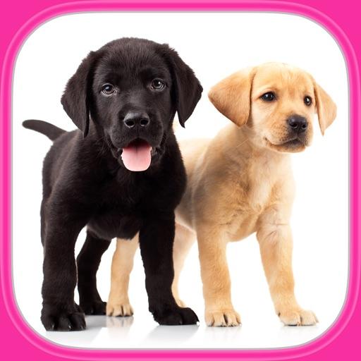 Puzzle Con Cani E Cuccioli Carinissimi Gioco Di Logica Per I