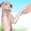 Puppy Training for Beginner Guide - Training Tips training