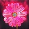 4K Flower - Best Free HD Flower Wallpaper madagascar national flower