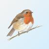 eGuide to British Birds
