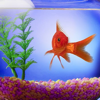 GoldFish Pets, Golden Fish Wallpapers & Pictures