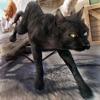Super Gatto Tom in Azione: la Corsa