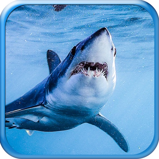 Shark! Hunting the Great White Hungry Shark Pro iOS App