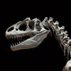 Paléontologie Glossaire: Cheatsheet avec le Guide d'étude