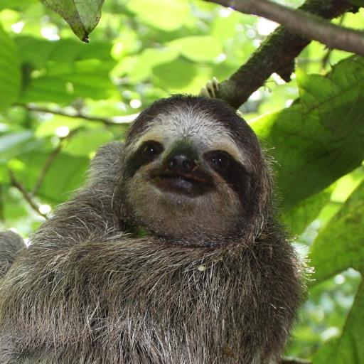 Flappy Sloth iOS App
