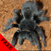 Spider Video and Photo Galleries FREE