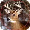 Deer Sniper Hunter 2016