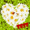 Test of Love flower