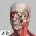 Anatomy atlas essential human body 해부학 아틀라스 필수 인체