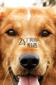 A Dog's Purpose Full Movie Mobile