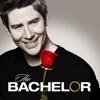 The Bachelor - 2204  artwork