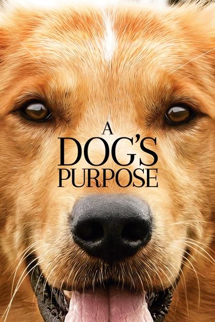 Dog S Purpose Movie