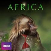 Africa - Africa Cover Art