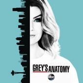 Grey's Anatomy, Season 13 - Grey's Anatomy Cover Art